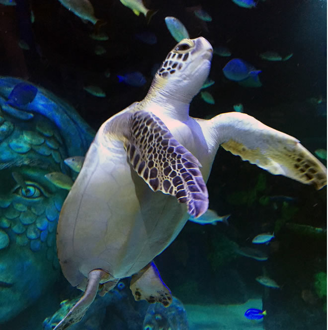 Visit SEA LIFE Michigan Aquarium at Great Lakes Crossing